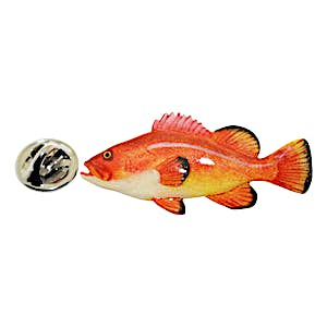 Grouper Pin ~ Hand Painted ~ Lapel Pin ~ Hand Painted Lapel Pin ~ Sarah's Treats & Treasures